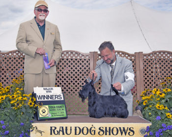 Kingsdale Scottish Terrier wins first three majors in one week.