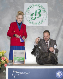 Kingsdale Scottish Terriers breeds and shows Scotties in NY