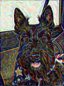 Purebred Scottish Terrier with stars n stripe scarf
