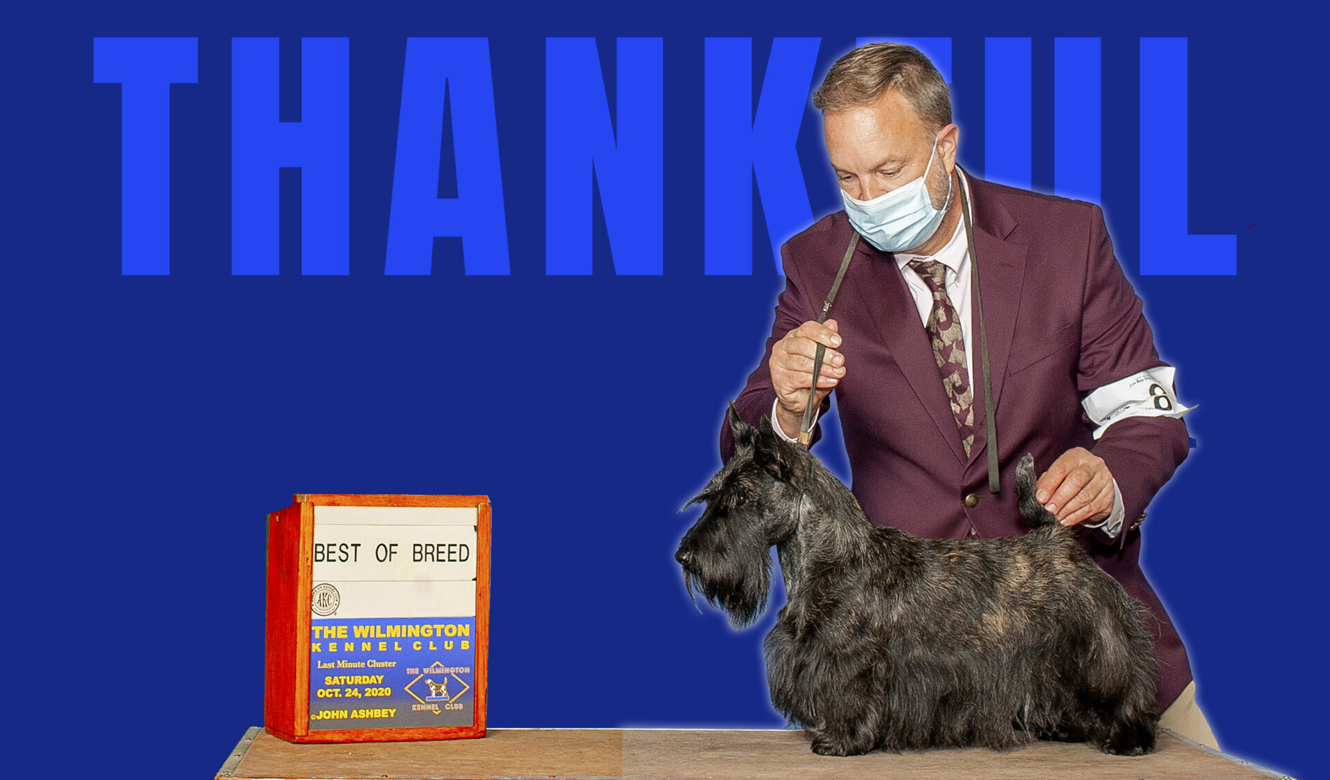 Kingsdale Scottish Terrier is Best of Breed at Wilmington Kennel Club Dog show