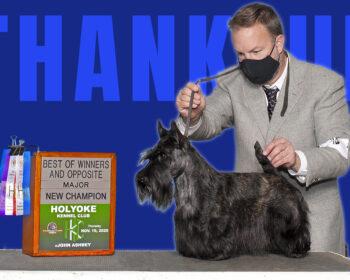 Kingsdale Scottish Terrier became a new Champion November 2020