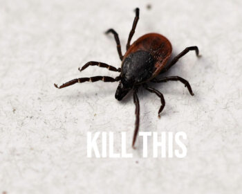 Tick are enemies of our dogs